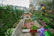 Миллион цветов: сделай свой двор краше!