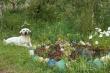 Цветущий Якутск: яркая палитра красок Мархи и Гагаринского округа