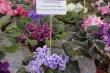 Год добра: цветущий Якутск радует горожан и гостей столицы