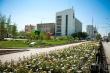 Год труда: Центральный округ столицы украсят более 200 тысяч цветов