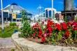 В рамках направления «Цветущий Якутск» в Центральном округе посажено 159 тысяч цветов