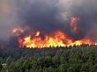 Об ответственности за неисполнение плана тушения лесных пожаров