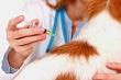 23 мая в Якутске проведут бесплатную вакцинацию животных от бешенства