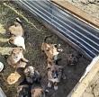Владельцам домашних животных напоминают об обязательной регистрации питомца