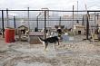 Директор Пункта передержки: «Тепло запущено, корм и вакцины для животных есть»