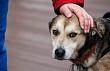 В Якутске стартовал месячник регистрации домашних животных