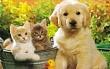 В Якутске обсудили вопросы обращения с безнадзорными животными