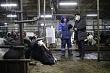 Евгений Григорьев посетил животноводческий комплекс «Багарах»