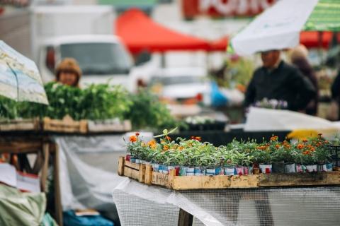 Год добрососедства: В Якутске открылась весенняя ярмарка «Дача. Огород. Усадьба»