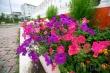 Приглашаем принять участие в фотовыставке «Цветущий Якутск»!