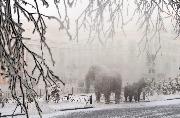 Мамонты в тумане 2 место Попов Иннокентий.jpg
