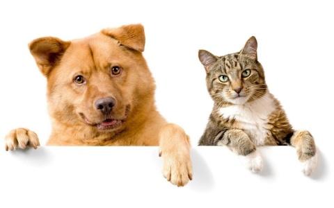 Якутская природоохранная прокуратура разъясняет, в каких случаях допускается использование домашних животных в предпринимательской деятельности