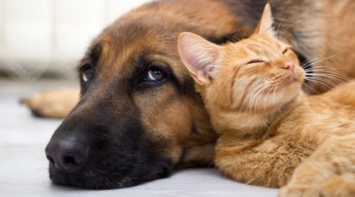 В Якутске продолжается регистрация домашних животных