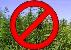 Землепользоватей призывают принять меры к нераспространению наркосодержащих растений