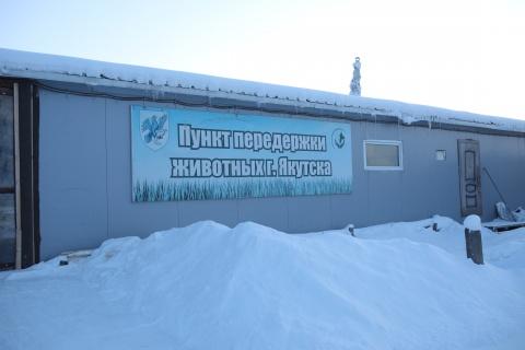 Верховный суд РС (Я) рассмотрит дело по иску Окружной администрации Якутска о передаче государственных полномочий по обращению с безнадзорными животными