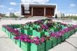 Год труда: в столице посажено уже более полумиллиона цветов