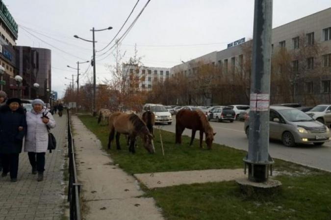 В Якутске планируют организовать специальное место для безнадзорных лошадей