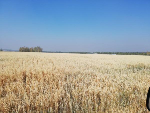 В Якутске в разгаре сбор урожая и заготовка кормов