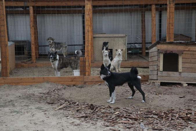 «Закон не учитывает специфики регионов»: в Якутии инициативная группа предлагает поправки в ФЗ «Об ответственном обращении с животными»