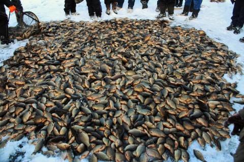 Что нужно знать рыбаку о правовом регулировании рыболовства
