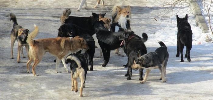 Пункт передержки безнадзорных животных: «Бригада по отлову собак отрабатывает каждую заявку»