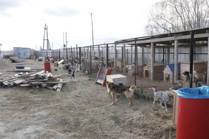 Пункт передержки безнадзорных животных г. Якутска: «Животные содержатся в тепле и чистоте, в разных помещениях»