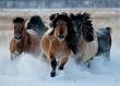 В Якутске впервые состоится парад всадников «Дьөһөгөй оҕолоро Айыы аартыгынан»