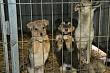 Разработаны методические указания по установлению порядка осуществления деятельности по обращению с животными без владельцев