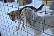 Общественная палата Якутска приглашает горожан обсудить проблему безнадзорных животных