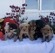 Пункт передержки безнадзорных животных города Якутска передан некоммерческой организации «Помоги выжить»