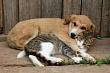 В Якутске завершился месячник регистрации домашних животных