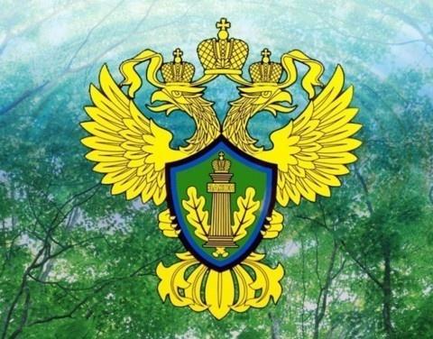 Якутская природоохранная прокуратура разъясняет о причинах возникновения лесных пожаров, правах и обязанностях лесопользователей и об ответственности за нарушение правил пожарной безопасности в лесах