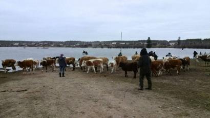 Вниманию владельцев сельскохозяйственных животных